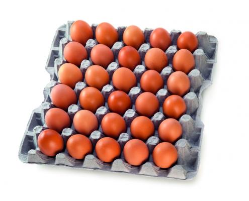 Etiqueta y código impreso en la cáscara de los huevos